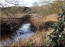 SO8687 : Brook by the Staffordshire and Worcestershire Canal, Gothersley by Roger  Kidd