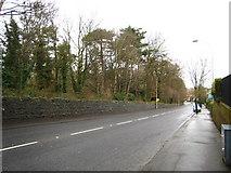 J3371 : Stranmillis Road, Belfast by Rossographer