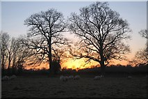 TL8063 : Sunset across fields at Little Saxham by Bob Jones