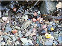 SH5873 : Pebbles and shells by Eirian Evans
