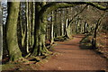 SO9380 : Footpath through trees, Clent Hills by Philip Halling