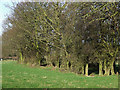 SO5688 : Grazing Land and Trees, near Holdgate, Shropshire by Roger  Kidd