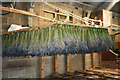 TF6837 : Lavender Shed at Norfolk Lavender, Heacham, Norfolk by Christine Matthews