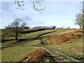 SO5187 : Hillside near Munslow, Shropshire by Roger  Kidd