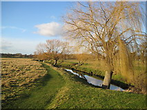 TQ2173 : Richmond Park: Beverley Brook by Nigel Cox