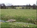 SO5184 : Towards Lawton, Shropshire by Roger  Kidd