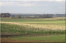 NT4164 : Game cover crops, Dodridge by Richard Webb
