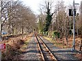 SN6080 : Vale of Rheidol Railway track at Glanyrafon by John Lucas