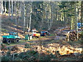 TL1240 : Logging Operation 1 by Dennis simpson