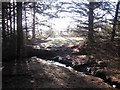 NY4778 : Woodland path and stream by Oliver Dixon