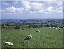 SX3970 : Farmland at Sevenstones by Trevor Rickard