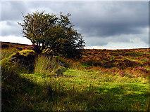 SX6781 : Dartmoor near Warren House Inn by Pam Brophy