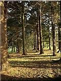 SX7962 : Woodland, Dartington Hall Gardens by Derek Harper