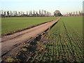 SJ7802 : Monarch's Way near Ryton by Row17