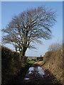 SX5647 : Lane from Great Prideaux by Derek Harper