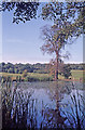 TQ2997 : Lake at Trent Country Park, London N14 with Elm Tree by Christine Matthews