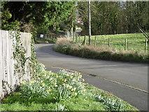 SJ5608 : Lane through Wroxeter. by Row17