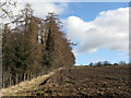 NY9965 : Arable land and woods near Cor Burn by Mike Quinn