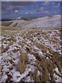 SD6597 : On Bush Howe by Michael Graham