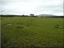 N9611 : Sheep pastures by Jonathan Billinger