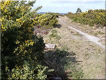 SZ0284 : Studland Heath by Nigel Mykura