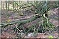 NZ7216 : Stream Junction, Handale Wood by Mick Garratt