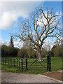 SO8031 : Winter tree at Eldersfield by Pauline E