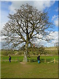 SU1068 : Avebury - Wishing Tree by Chris Talbot