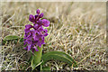 HP6409 : Early Purple Orchid (Orchis mascula), Keen of Hamar by Mike Pennington