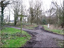 TQ2353 : Bridleway junction on the edge of Walton Heath by Colin Bell