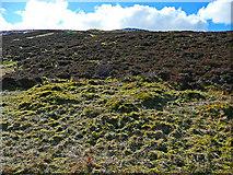 NN5741 : Heather clad moorland and bog by Dr Richard Murray