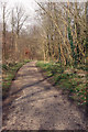 SE8353 : The Track through Millington Woods by Peter Church