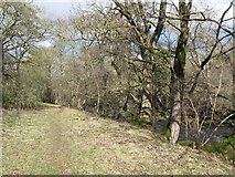 NY9539 : Footpath alongside Rookhope Burn by Mike Quinn
