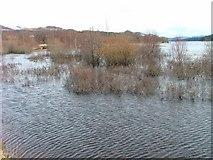 NN4886 : High Water on Loch Laggan by Dave Fergusson