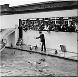 TQ2883 : Penguin enclosure, London Zoo, Camden, taken 1967 by Christine Matthews