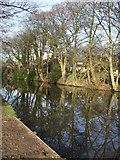 SD4760 : Reflection of trees along Lancaster canal by Gemma Davies