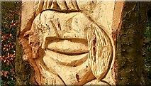 J4772 : Carving, Killynether Wood (2) by Albert Bridge