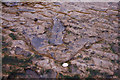 NG4968 : Dinosaur footprint on Staffin beach by John Allan