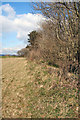 SS8679 : Field/woodland boundary 1 km south west of Laleston by eswales