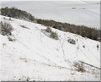 SU6022 : Animal tracks in the snow on side of Beacon Hill by Peter Facey
