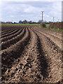 SE8931 : Awaiting potatoes? by Paul Harrop