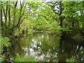 SJ0218 : River Vyrnwy below the Lake Vyrnwy dam by John Firth