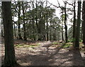 J4877 : Woodland at Helen's Tower by Rossographer