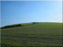 TQ2010 : Windmill Hill by Simon Carey