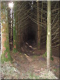 NY5679 : Into the Forest we go ... by David Liddle