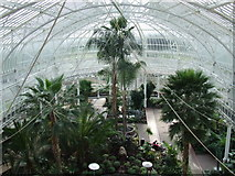 NS6064 : People's Palace Winter Garden by Thomas Nugent