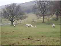 SD6382 : Barbon Park by Rod
