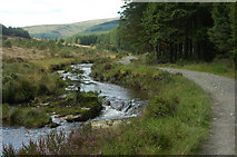 SN8587 : Severn Way in Hafren Forest by Row17
