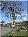 NS9999 : Beech tree by Jonathan Billinger