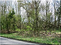 SU6350 : Patch of woodland on Farleigh Road - B3046 by Given Up